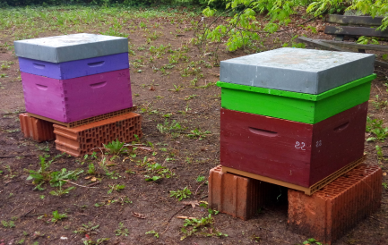 Capture ruche.PNG